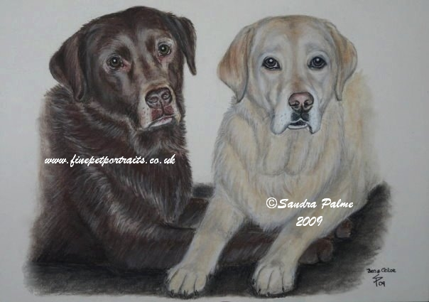 Labrador Retrievers portrait
