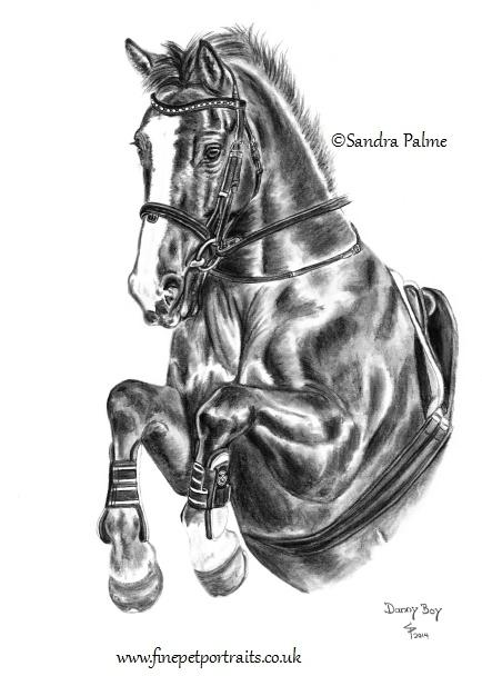 Irish Sports horse portrait in charcoal