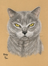 Chartreux cat painting