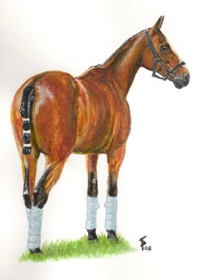 Polo pony portrait