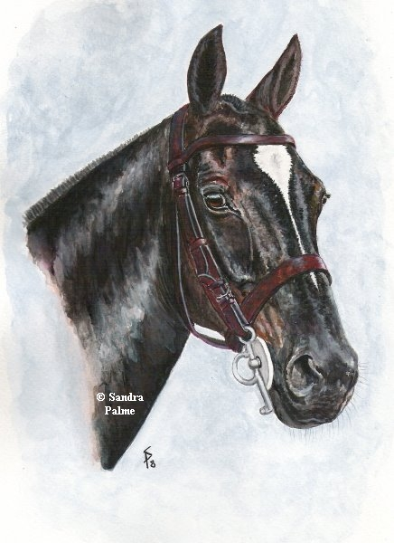 Polo pony watercolour painting