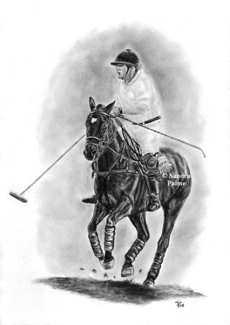 Polo pony horse portrait