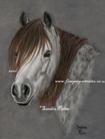 Horses Portrait Gallery Pastel