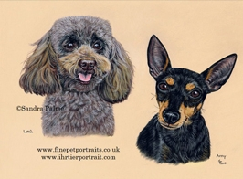 Toy Poodle and Toy Manchester Terrier