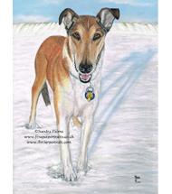 Smooth Collie pastel portrait