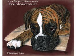 Boxer Pastel Portrait