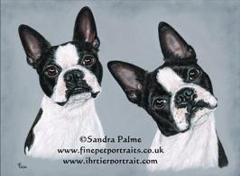 Boston Terriers pastel portraits