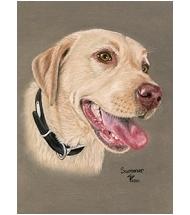 Yellow Labrador Pastel portrait on Pastelcard (A4)