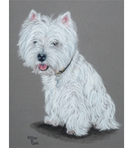 Westie Terrier pastel portrait on velour paper