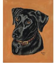 Black Labrador portrait pastels