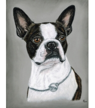 Boston Terrier pastel portrait