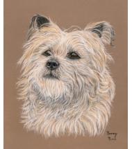 Cairn Terrier pastel portrait