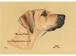 Rhodesian Ridgeback pastel portrait