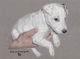 Parson Russell Terrier pastel portrait