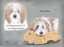 French Sheep Dog pastel portrait