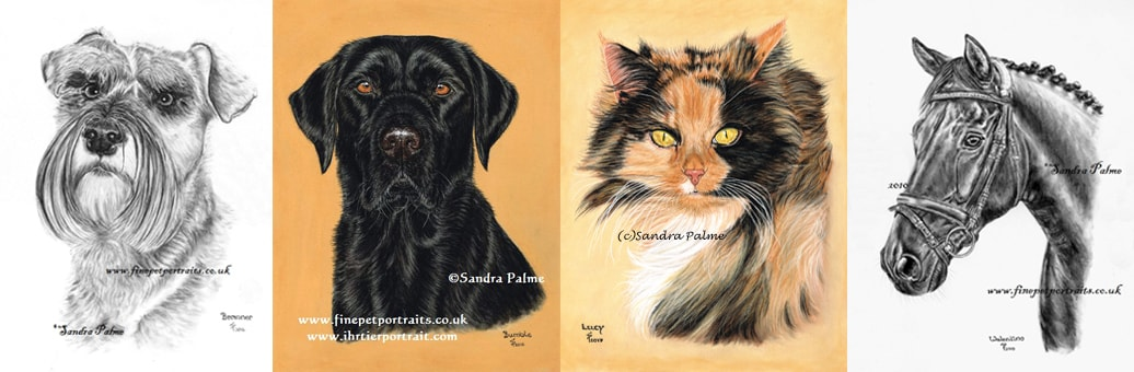 Pet portraits of two dogs, cat and a horse