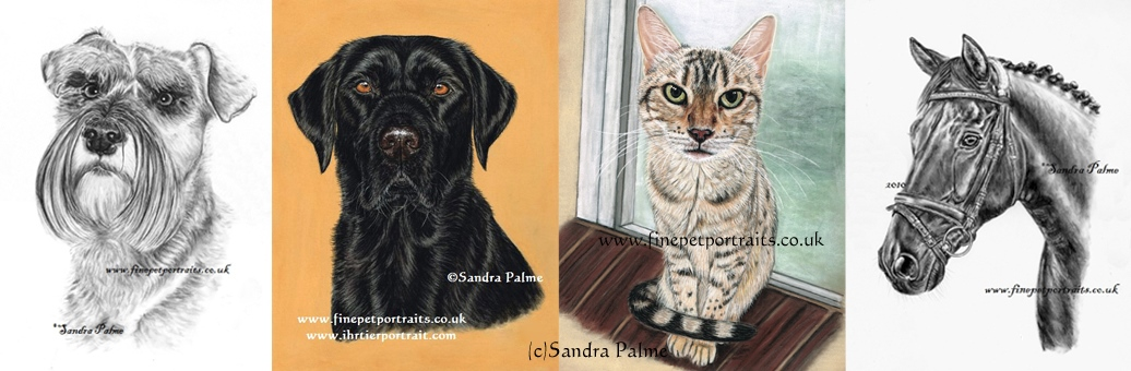 Pet Portraits by Sandra Palme - Dogs, Cat and Horse