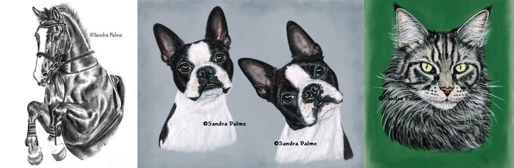 Pet portraits by artist Sandra Palme of charcoal horse and dogs and cat in pastel.