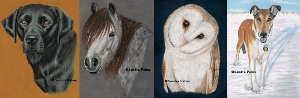 Pastel drawings by fine pet portrait artist Sandra Palme of Black Labrador, pony, dog and Barn Owl.