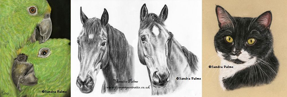 Pastel drawings of pet Amazons, horses and black and white cat.