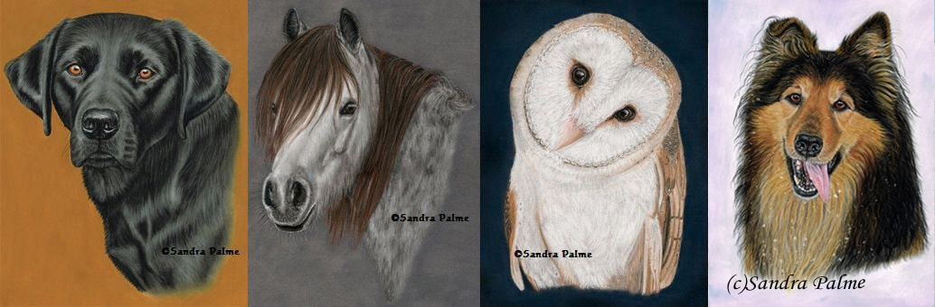 Labrador portrait, horse, owl and dog portrait
