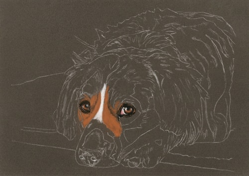dog portrait work in progress 2