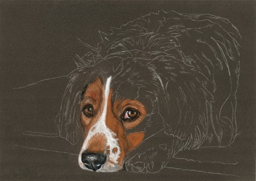 dog portrait work in progress 3