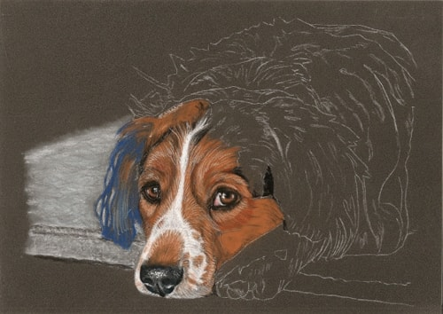 dog portrait work in progress 4