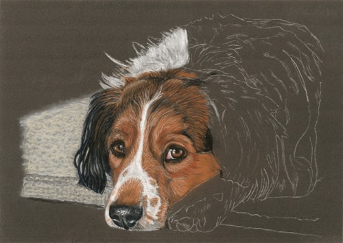 dog portrait work in progress 5