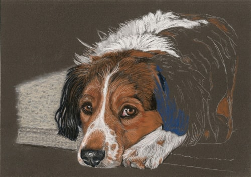 dog portrait work in progress 6