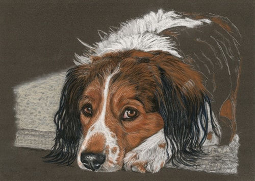 dog portrait work in progress 7