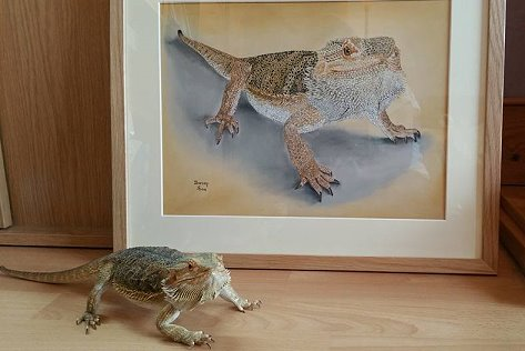 Bearded Dragon Darcey approves of her portrait.