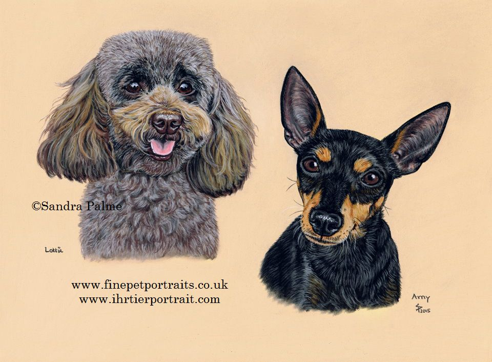 Toy Poodle and Toy Manchester Terrier Portrait