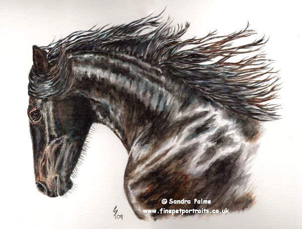 Friesian Filly watercolour
