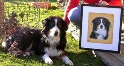 Australian Shepherd dog Kira posing with her portrait.