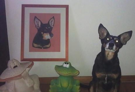 Podenco x Maya with her portrait.