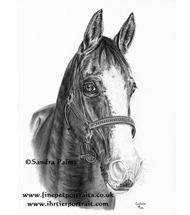 Arab - Lipizzaner - Paint Horse drawing