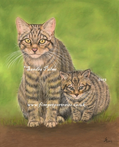 Scottish Wildcats portrait