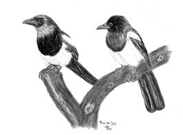 Magpies charcoal portrait