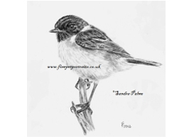 Stonechat charcoal drawing