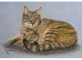 Tabby Cat Pastel cat portrait on Pastelcard (A4)