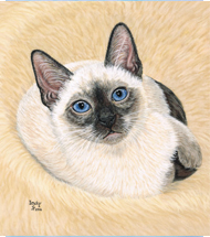 Cat Pastel Portrait