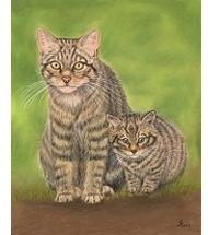 Scottish Wildcats pastel portrait