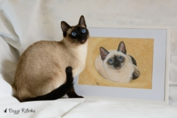 Thai Cat Indy loves the portrait of himself as a kitten!