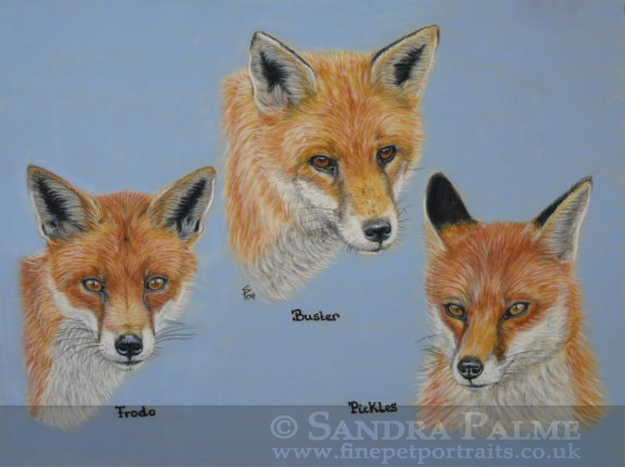 red foxes pastel portrait