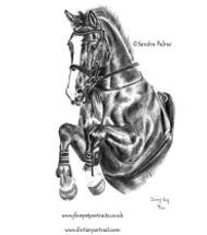 Irish Sport Horse charcoal portrait