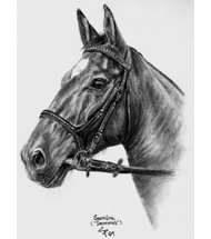 Bay Mare charcoal portrait
