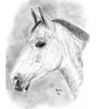 Westphalian Warmblood charcoal portrait