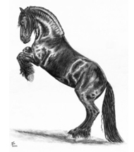Friesian Stallion charcoal portrait