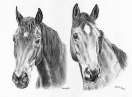Warmblood Horses charcoal portrait